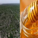 PM Khan launches Rs. 2 Billion honey project to boost honey production